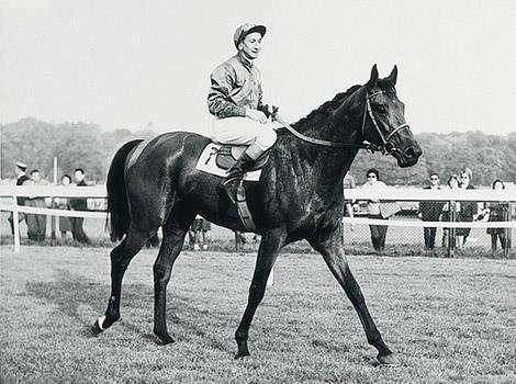 """Résultat de recherche d'images pour """"charlottesville horse grand prix de paris"""""""